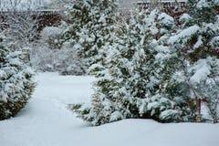 Opinião nevado do jardim no inverno com pinheiros Fotografia de Stock Royalty Free