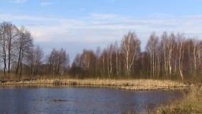 Opinião nevoenta panorâmico do amanhecer de Vistula River durante o período adiantado da mola filme