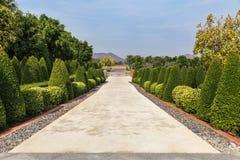 Opinião o arbusto que apara o parque do ornamental em público e o campo de grama verdes Imagem de Stock