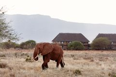 Opinião o elefante e o rebanho das zebras no safari africano com grama seca e árvores no savana, com alojamento e montanhas no fu fotografia de stock