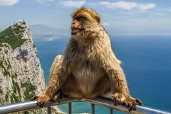 Opinião o macaco em uma balaustrada da construção na montanha, fotografia de stock royalty free