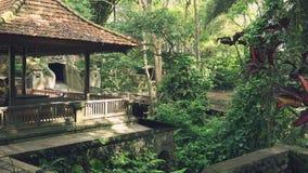 Opinião o macaco Forest Sanctuary de Ubud filme