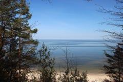 Opinião o mar Báltico e o pinho imagem de stock royalty free