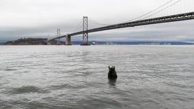 Opinião o San Francisco Oakland Bay Bridge e boia filme