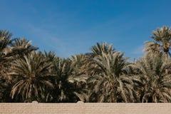 A opinião o unesco recrutou oásis em Al Ain, UAE fotografia de stock