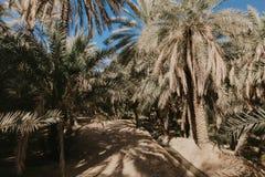 A opinião o unesco recrutou oásis em Al Ain, UAE imagem de stock