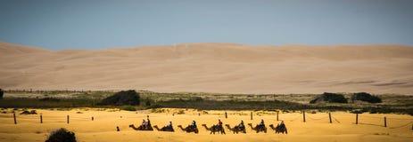 Opinião os camelos no deserto Imagens de Stock Royalty Free