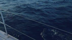Opinião os golfinhos que nadam na frente da curva do iate durante o por do sol vídeos de arquivo