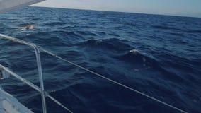 Opinião os golfinhos que nadam na frente da curva do iate durante o por do sol filme