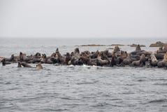 Opinião os leões de mar que descansam na praia na costa imagem de stock royalty free