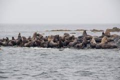 Opinião os leões de mar que descansam na praia na costa fotografia de stock
