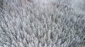 Opinião os pinhos cobertos de neve na floresta, vista superior imagens de stock