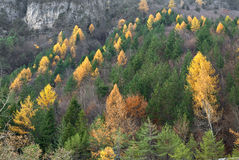 Opinião outonal da floresta da montanha Foto de Stock Royalty Free