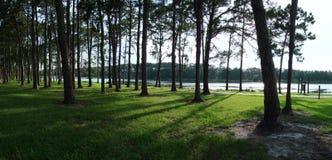 Opinião panorâmico do lago com árvores Imagem de Stock