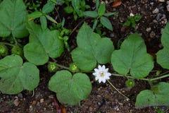 A opinião pequena de flor branca Fotos de Stock