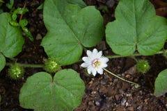 A opinião pequena de flor branca Fotografia de Stock