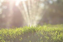 Opinião próxima a grama na luz solar, sistema de extinção de incêndios da água no fundo Fotografia de Stock Royalty Free