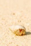 Opinião próxima o caranguejo com shell no Sandy Beach em maldives fotos de stock royalty free