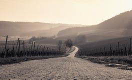 Opinião romântica da paisagem do vinhedo Imagens de Stock Royalty Free