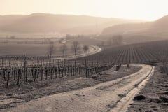 Opinião romântica da paisagem do vinhedo Foto de Stock