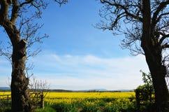 Opinião rural do campo Imagens de Stock Royalty Free