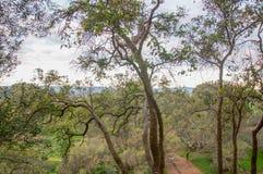 Opinião superior da árvore fotos de stock royalty free
