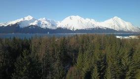 Opinião superior da árvore de Alaska video estoque