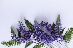 Opinião superior da beira da flor Fotos de Stock