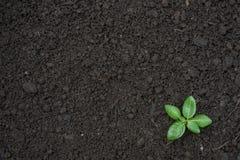 A opinião superior da superfície da planta verde da plântula textured o fundo fotografia de stock royalty free