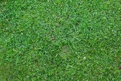 Opinião superior da textura lisa da grama verde imagem de stock