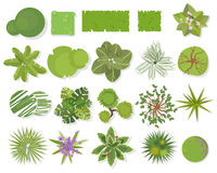Opinião superior das árvores Árvores diferentes, grupo do vetor das plantas para o projeto arquitetónico ou da paisagem Ajardinan Imagem de Stock