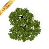 Opinião superior das árvores para a ilustração do vetor da paisagem Fotos de Stock