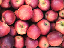 Opinião superior das maçãs vermelhas, suculentas, maduras Muito fruto limpo, puro na venda no mercado Foto de Stock