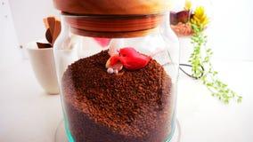 Opinião superior de feijões de café no fundo branco limpo com composição de copos de café, pássaros coloridos, lâmpadas, jardim n Imagens de Stock