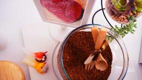 Opinião superior de feijões de café no fundo branco limpo com composição de copos de café, pássaros coloridos, lâmpadas, jardim n Foto de Stock Royalty Free