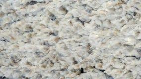 Opinião superior do close up da planta branca das algas que vibra na água de Hot Springs no movimento lento video estoque