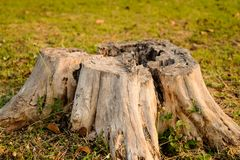 Opinião superior do close up velho do coto de árvore disparada do centro imagem de stock