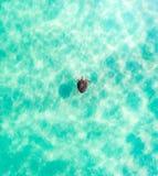 Opinião superior do feriado da praia uma tartaruga no oceano de turquesa foto de stock