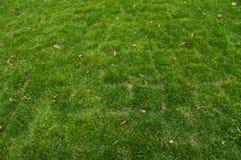Opinião superior a grama verde fotos de stock