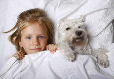 Opinião superior a menina loura bonita que encontra-se com o cão de cachorrinho branco do schnauzer na cama branca Conceito da am Foto de Stock