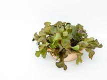 Opinião superior o copo de madeira do carvalho verde no fundo branco Fotografia de Stock Royalty Free
