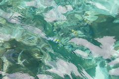 Opinião superior o mar e os peixes Foto de Stock