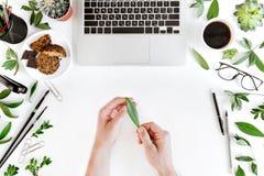 Opinião superior parcial a pessoa que guarda a folha verde no local de trabalho com portátil, xícara de café, folhas do verde e m Fotografia de Stock