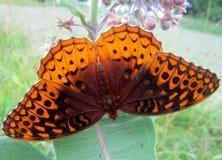 Opinião superior uma borboleta imagens de stock
