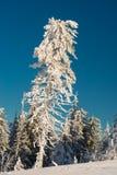 Opinião surpreendente do inverno fotografia de stock