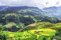 Opinião Terraced do campo do arroz, pa bronzeado, Vietname do La Imagem de Stock