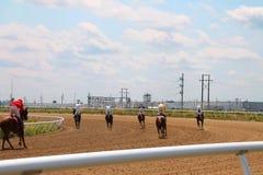 Opinião traseira cavalos de raça após a raça Fotografia de Stock Royalty Free