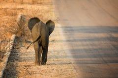 Opinião traseira do elefante do bebê imagem de stock