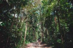 Opinião traseira a jovem mulher em uma floresta tropical fotografia de stock
