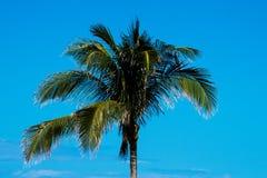 Opinião tropical da palmeira & do céu imagem de stock royalty free